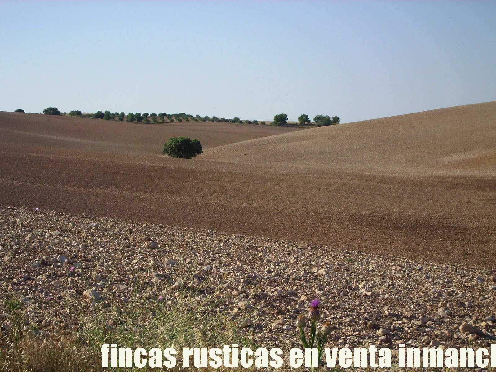 474_fincas-en-venta-1