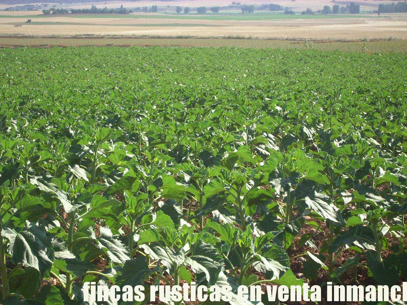 474_fincas-en-venta-12