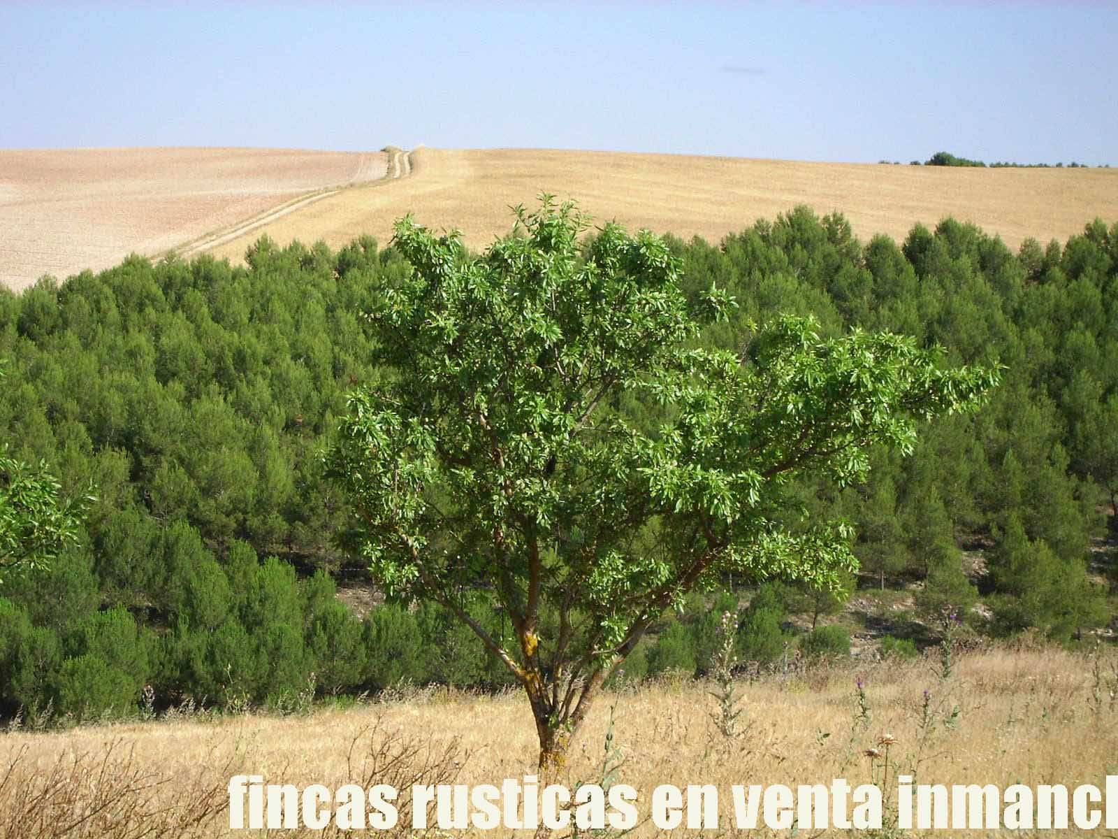 474_fincas-en-venta-14