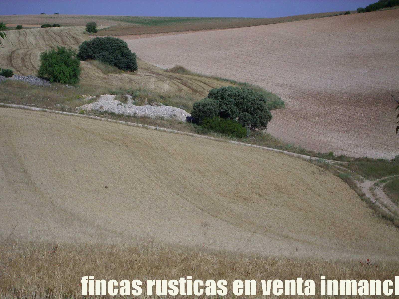 474_fincas-en-venta-16