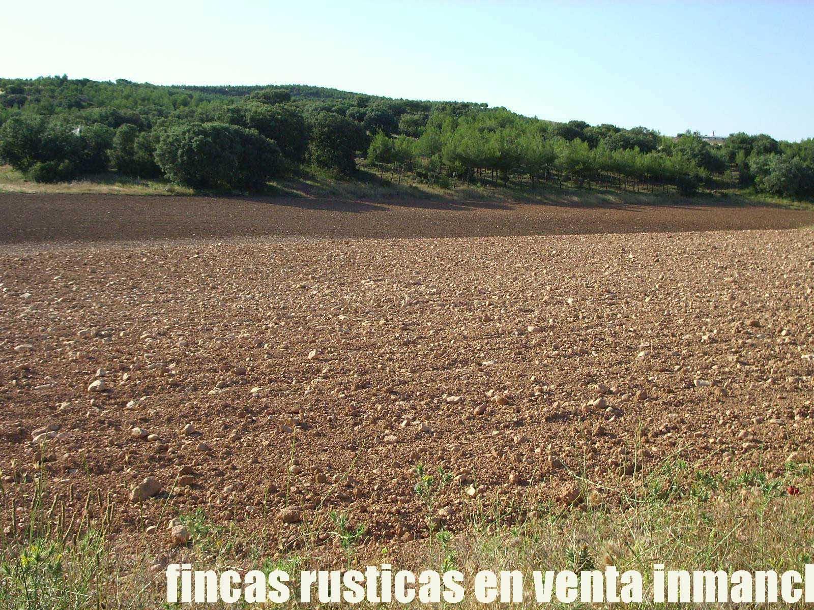 474_fincas-en-venta-25