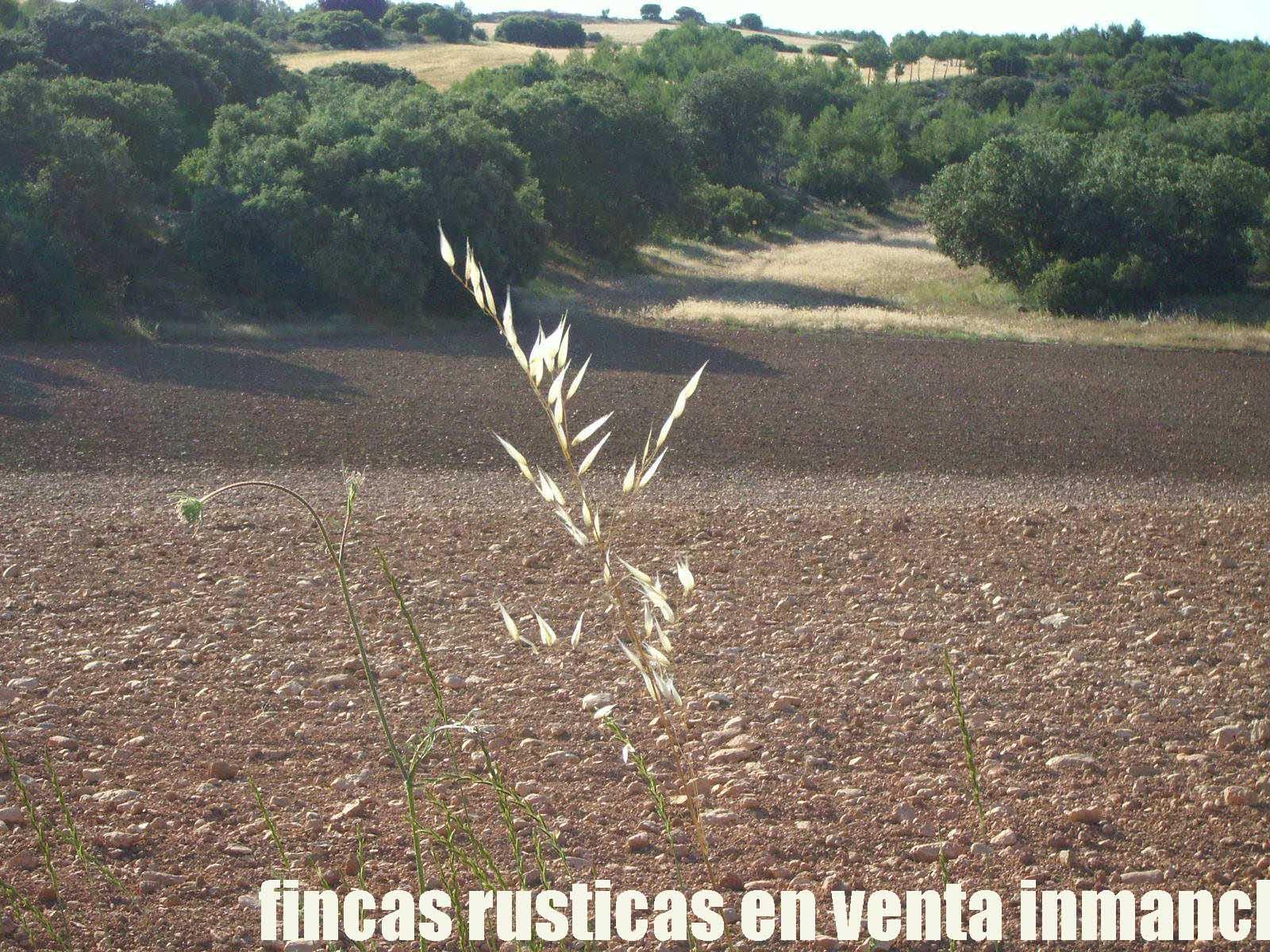 474_fincas-en-venta-27