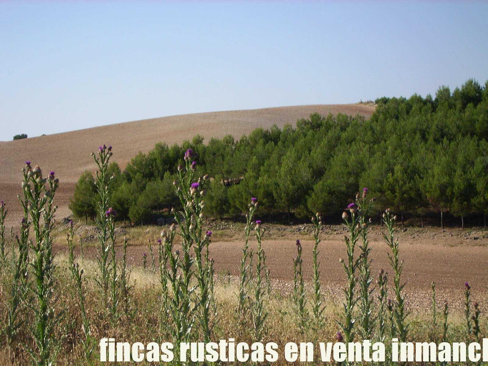 474_fincas-en-venta-28