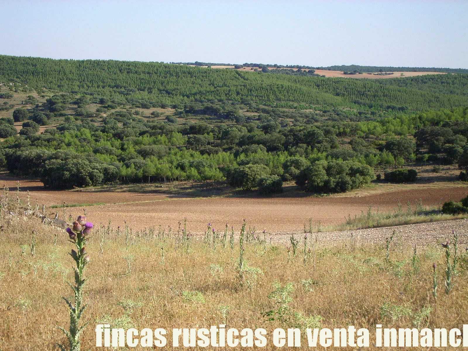 474_fincas-en-venta-31