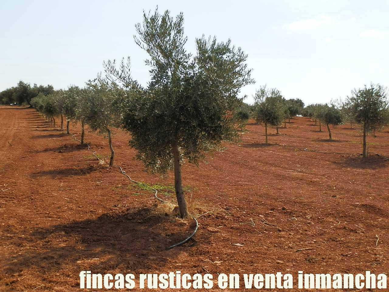 479_fincas-en-venta-12