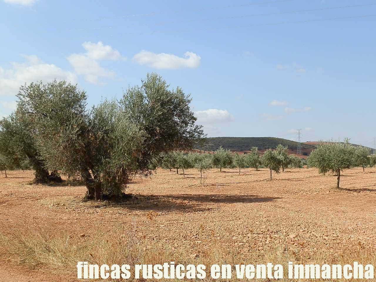 479_fincas-en-venta-27