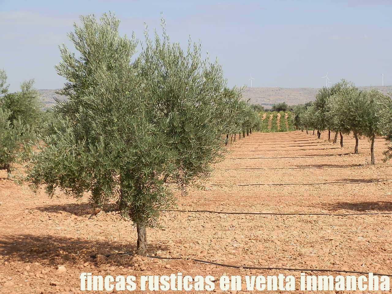 479_fincas-en-venta-29
