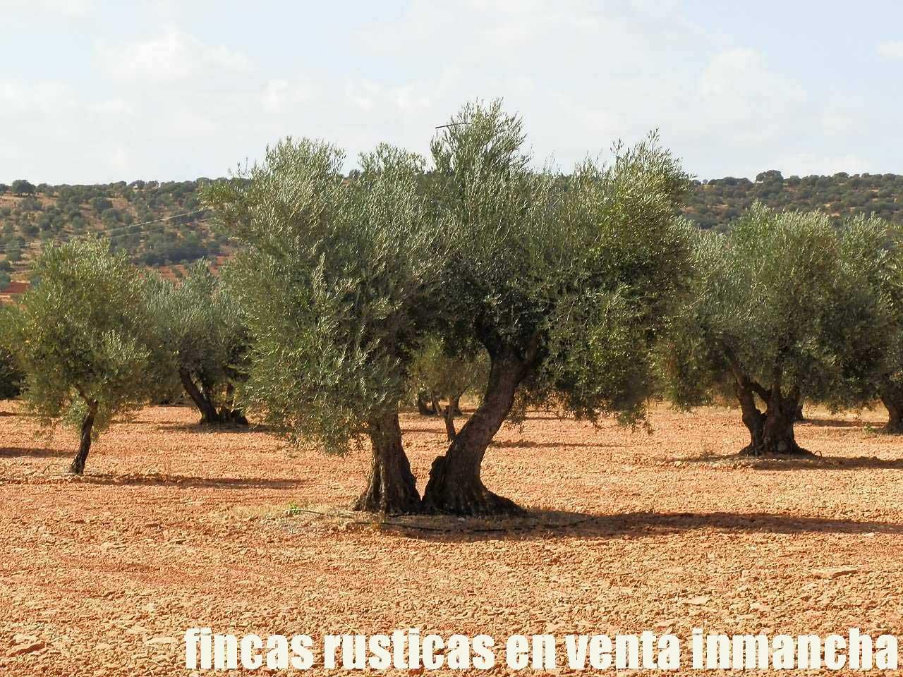 479_fincas-en-venta-32