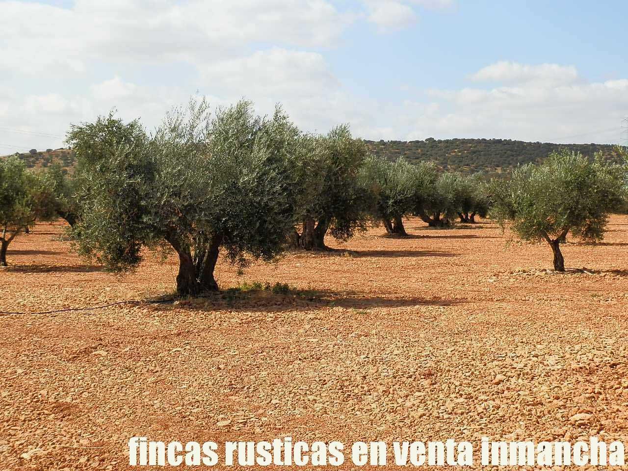 479_fincas-en-venta-34