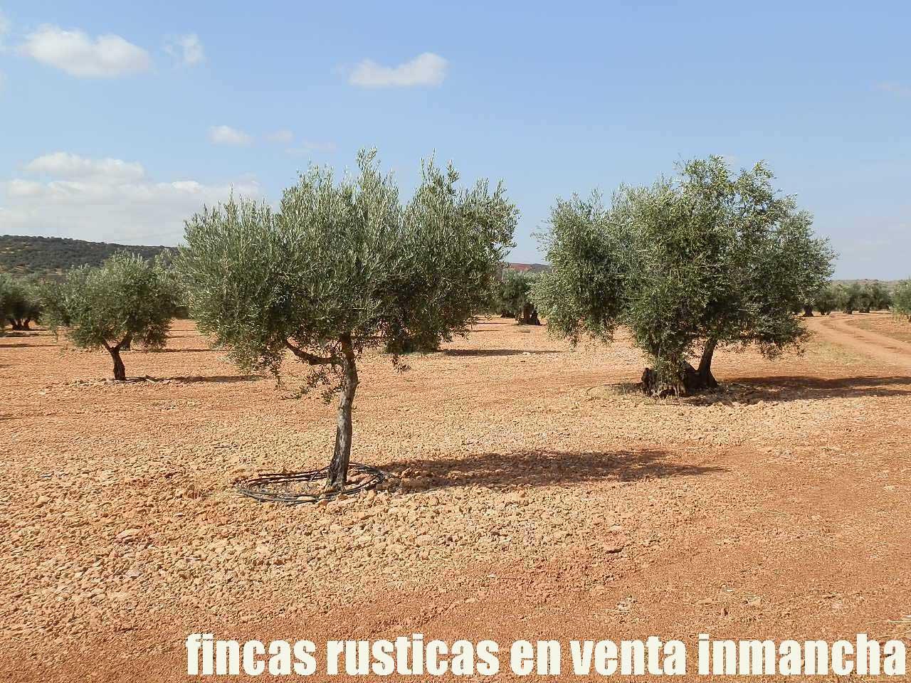 479_fincas-en-venta-35