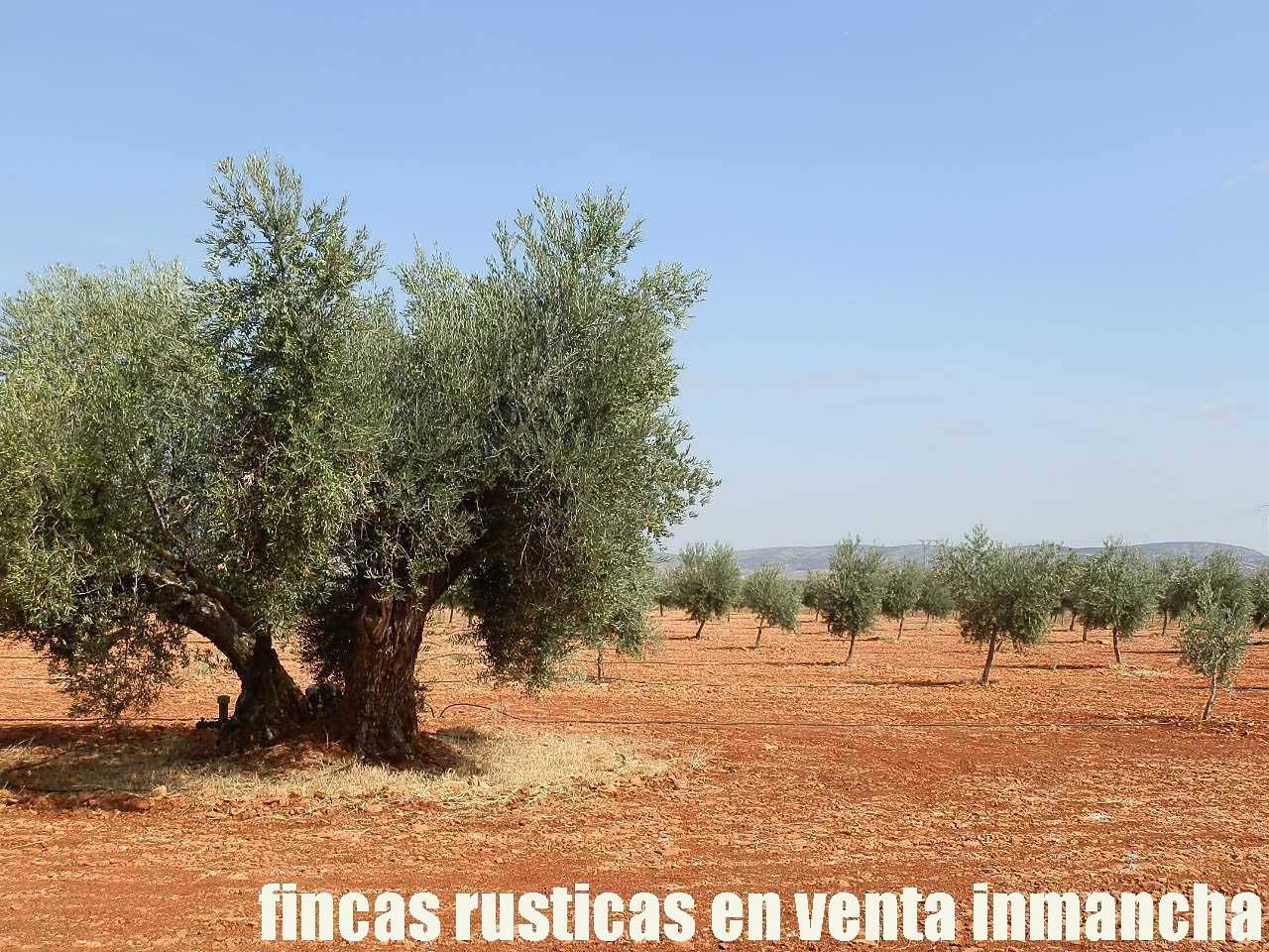 479_fincas-en-venta-40