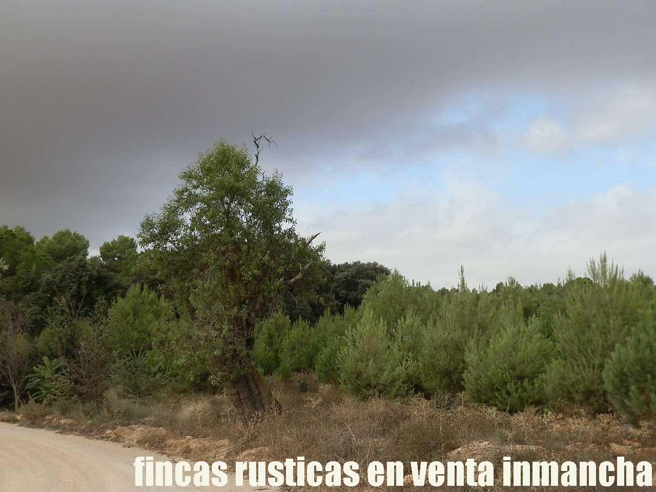 480_fincas-en-venta-019