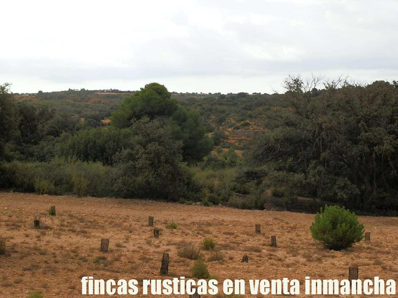 480_fincas-en-venta-027