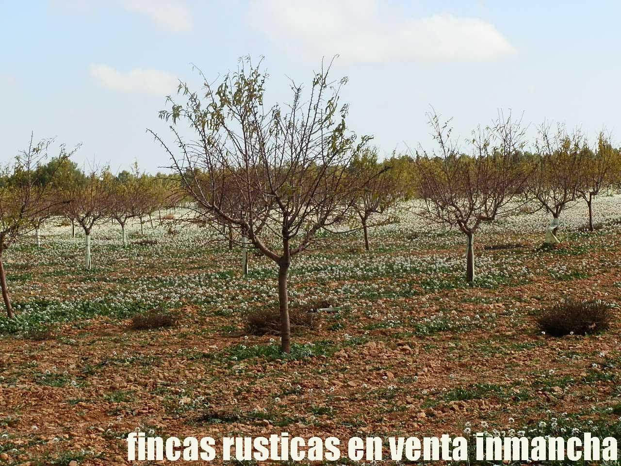 481_fincas-en-venta-88