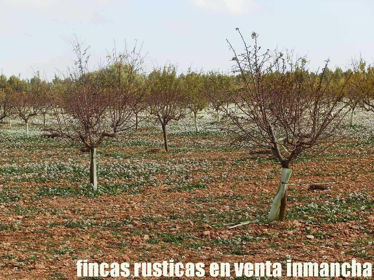 481_fincas-en-venta-89