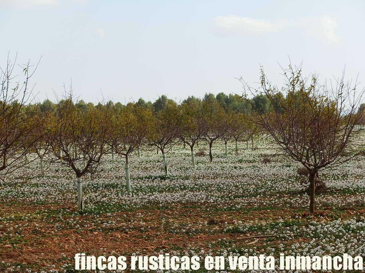 481_fincas-en-venta-90