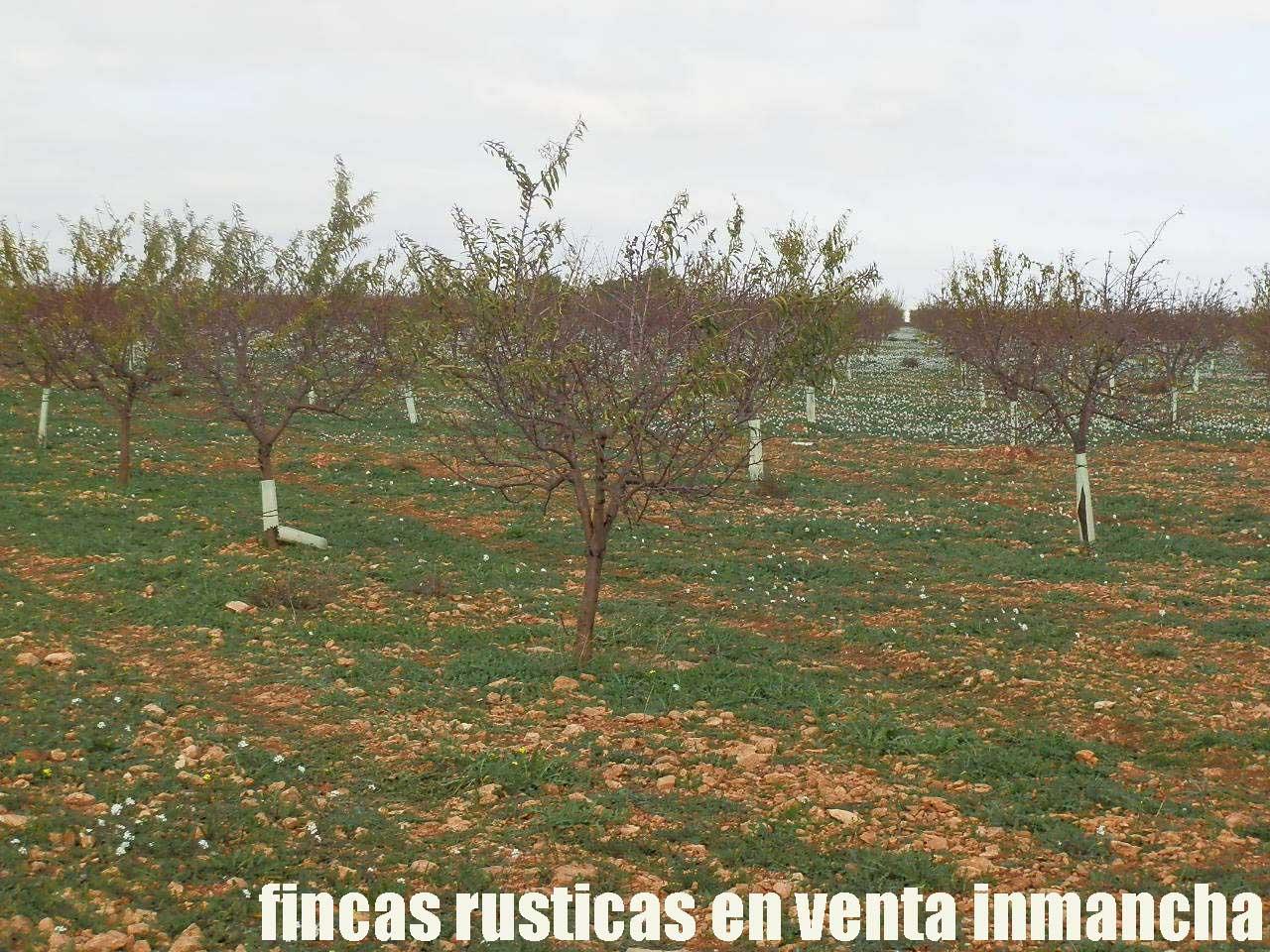 481_fincas-en-venta-91