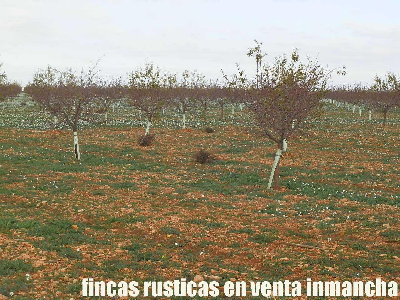 481_fincas-en-venta-92