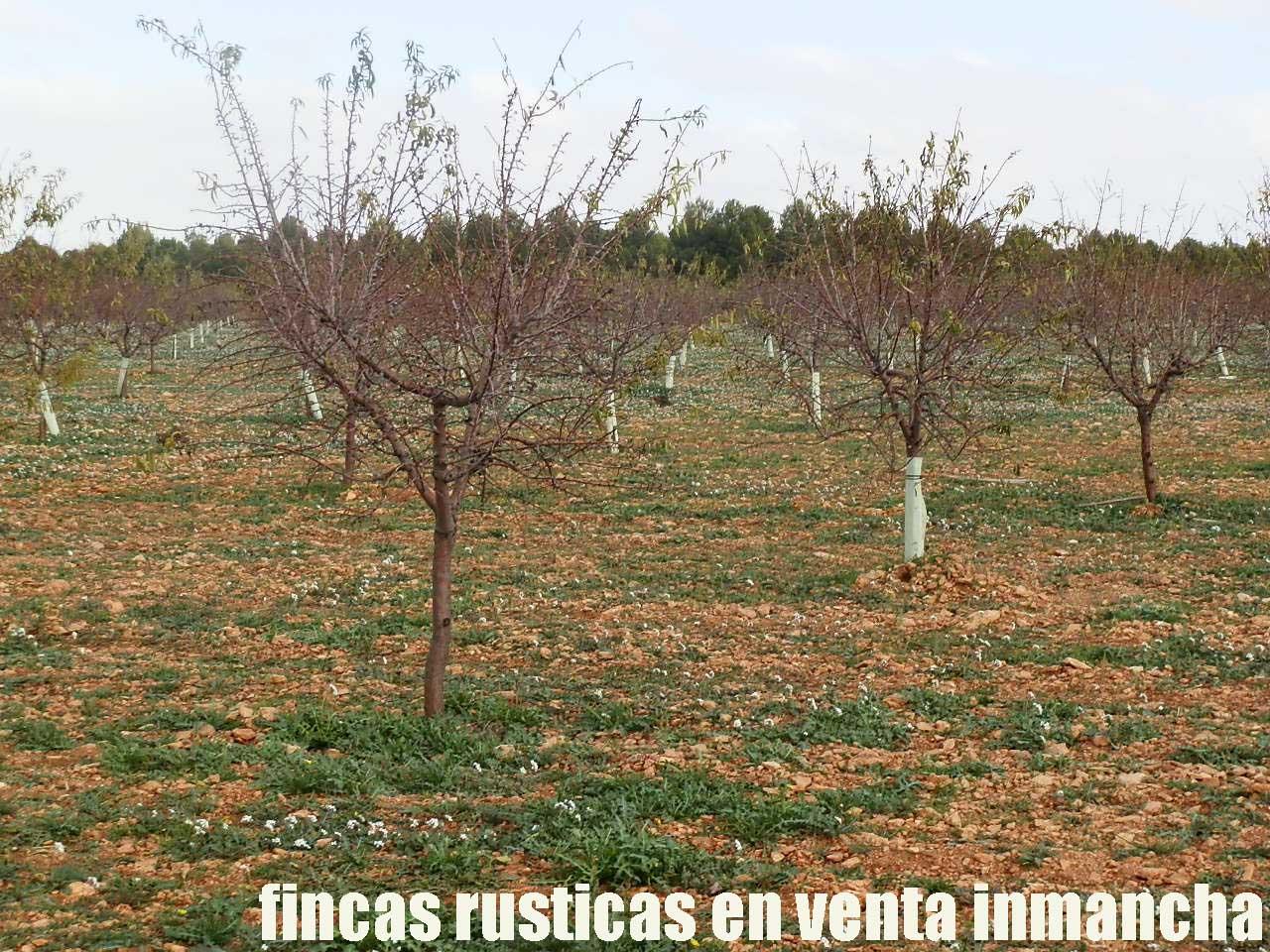 481_fincas-en-venta-93