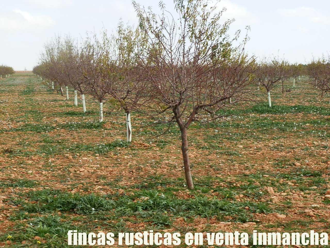 481_fincas-en-venta-94