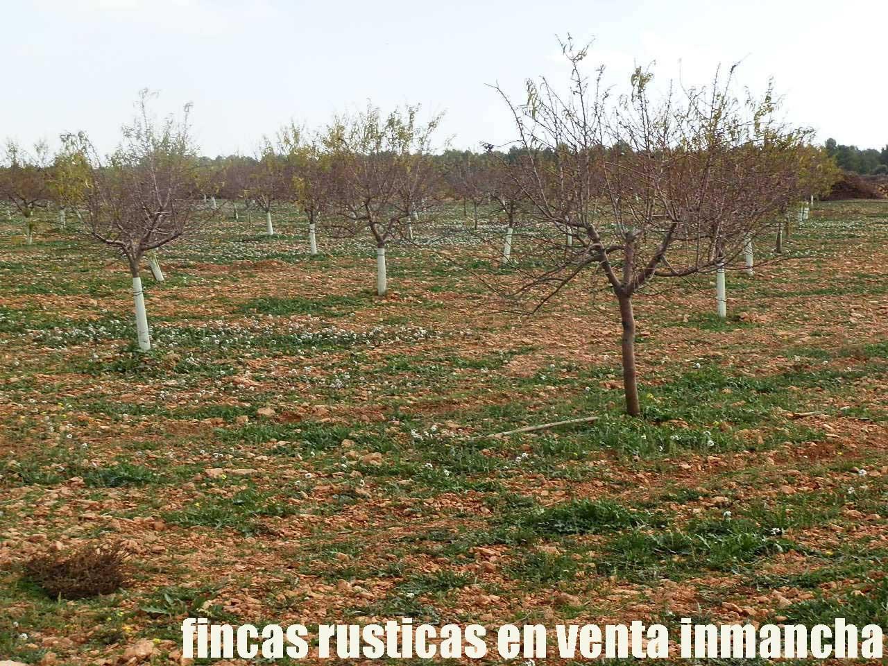 481_fincas-en-venta-95