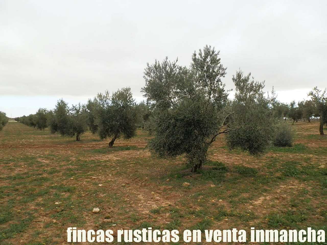 482_fincas-en-venta-65