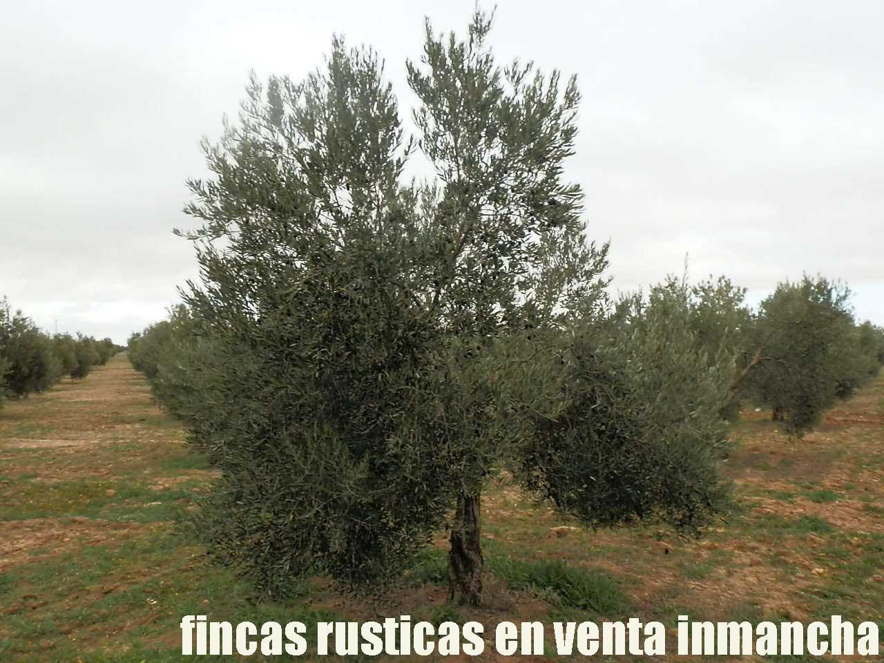 482_fincas-en-venta-66