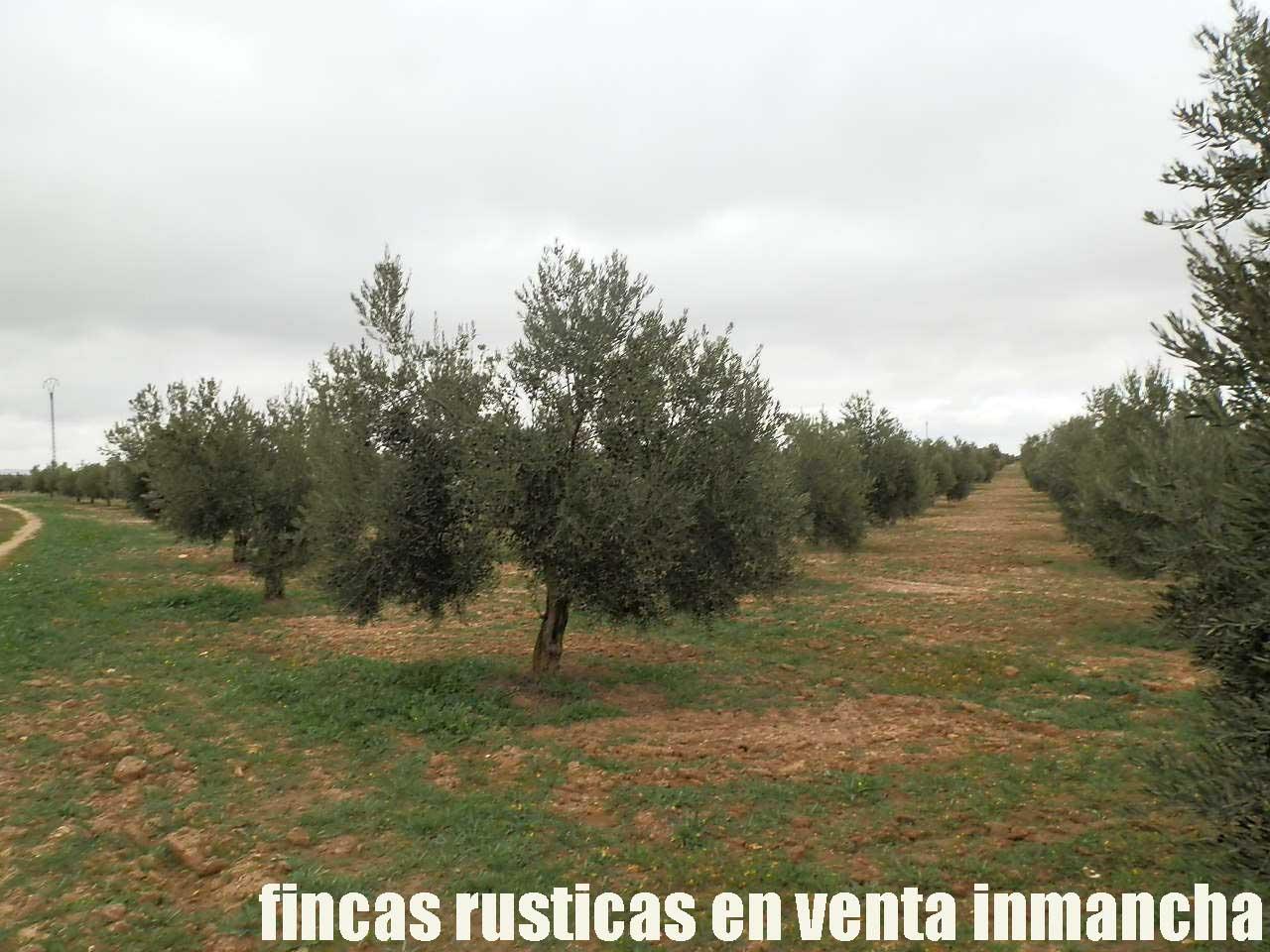 482_fincas-en-venta-67