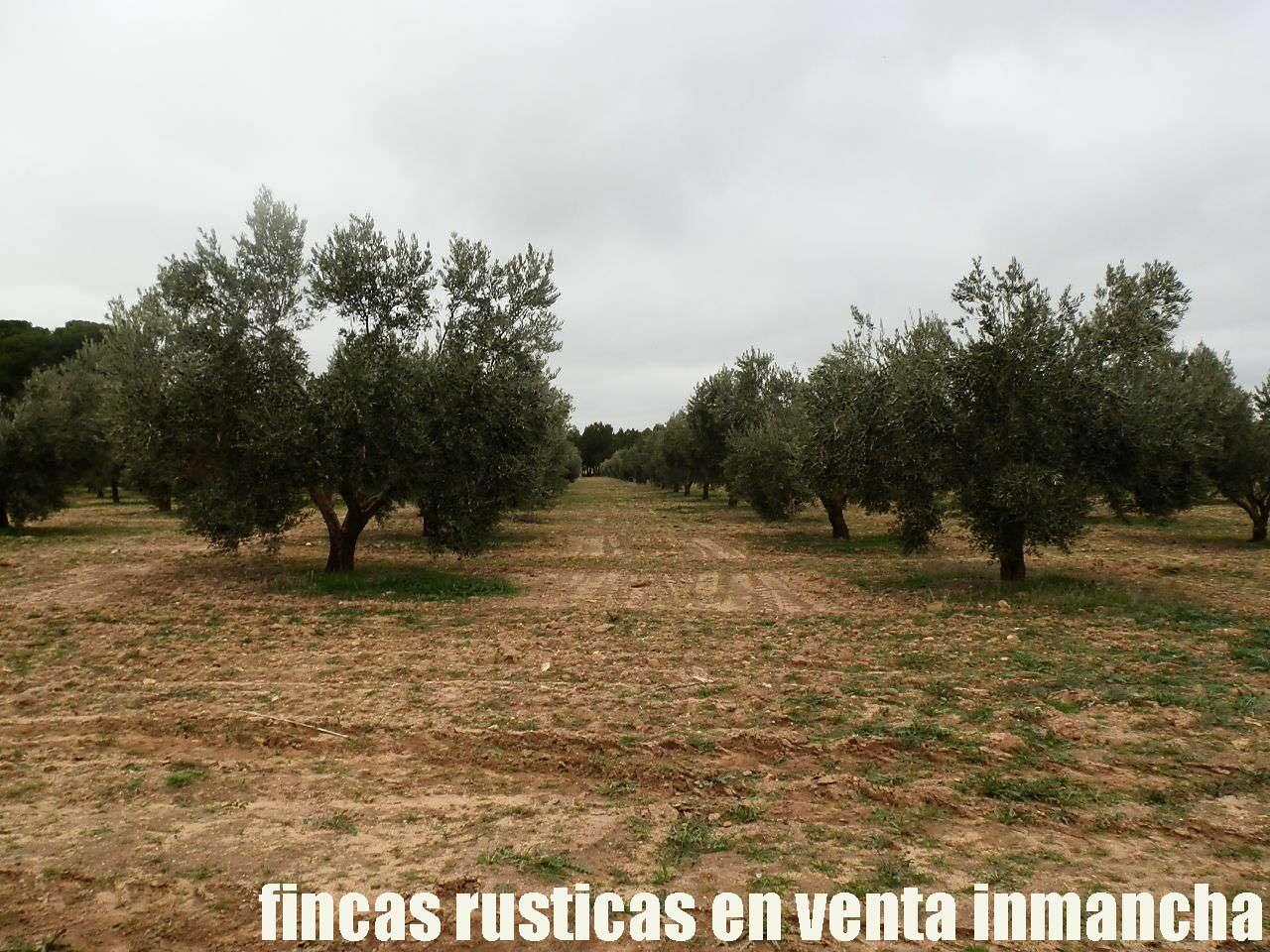 482_fincas-en-venta-68