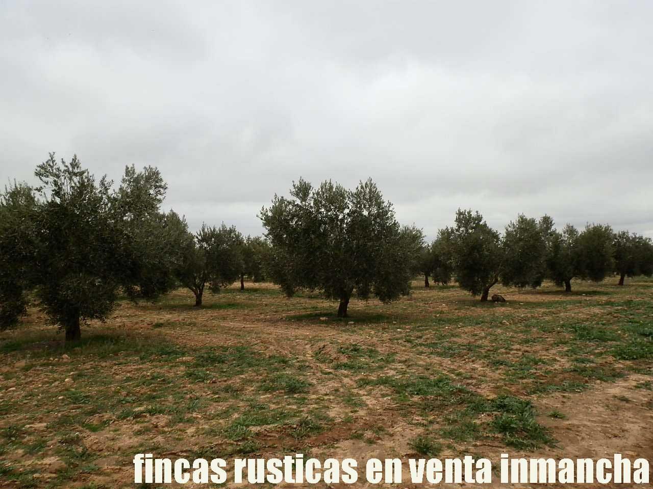 482_fincas-en-venta-69