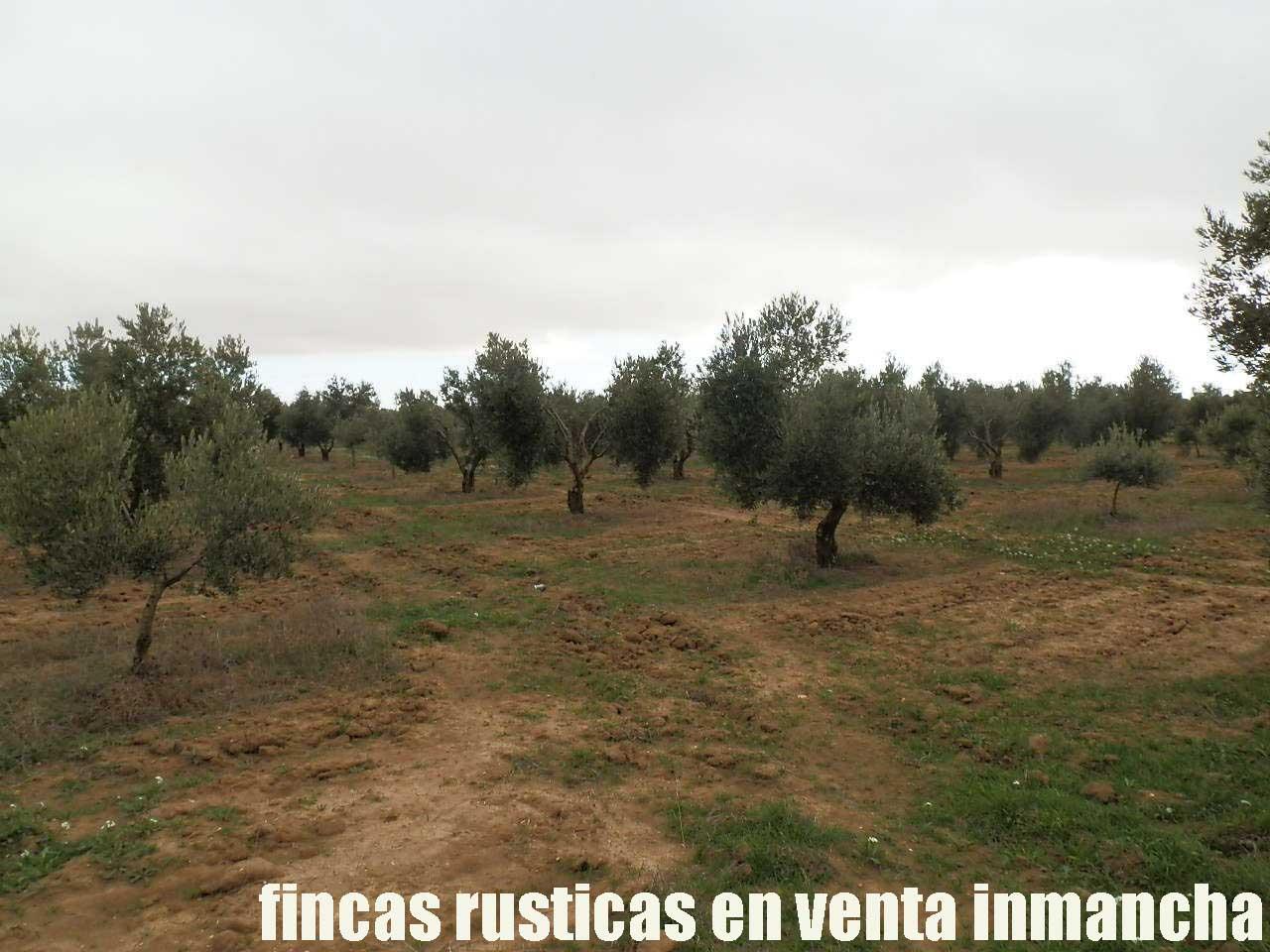482_fincas-en-venta-71