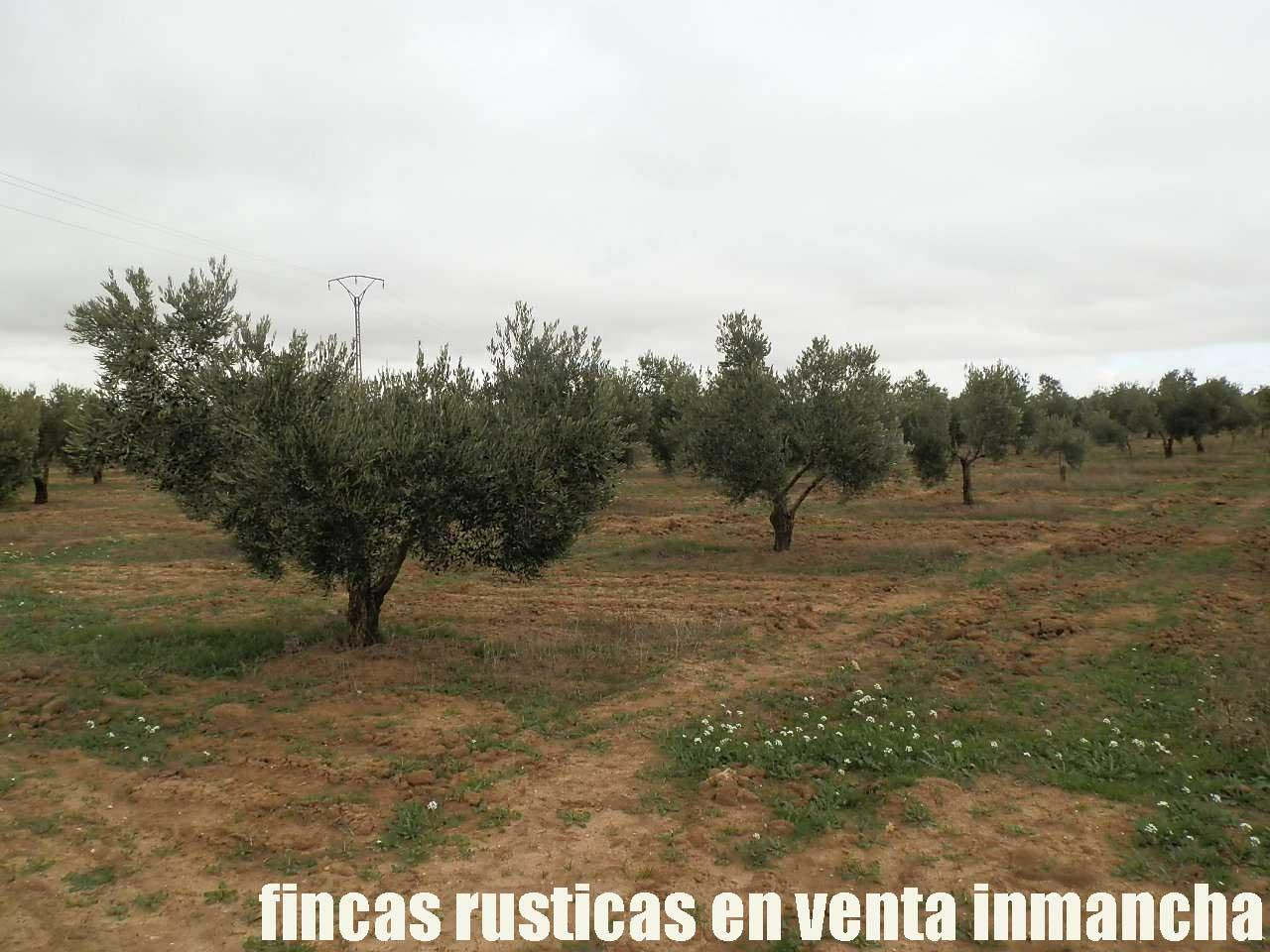 482_fincas-en-venta-72