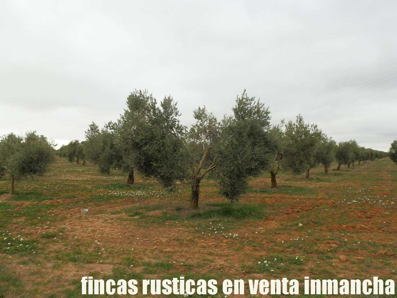 482_fincas-en-venta-73