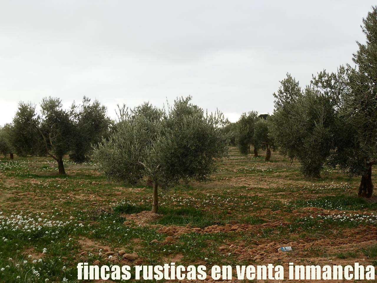 482_fincas-en-venta-74