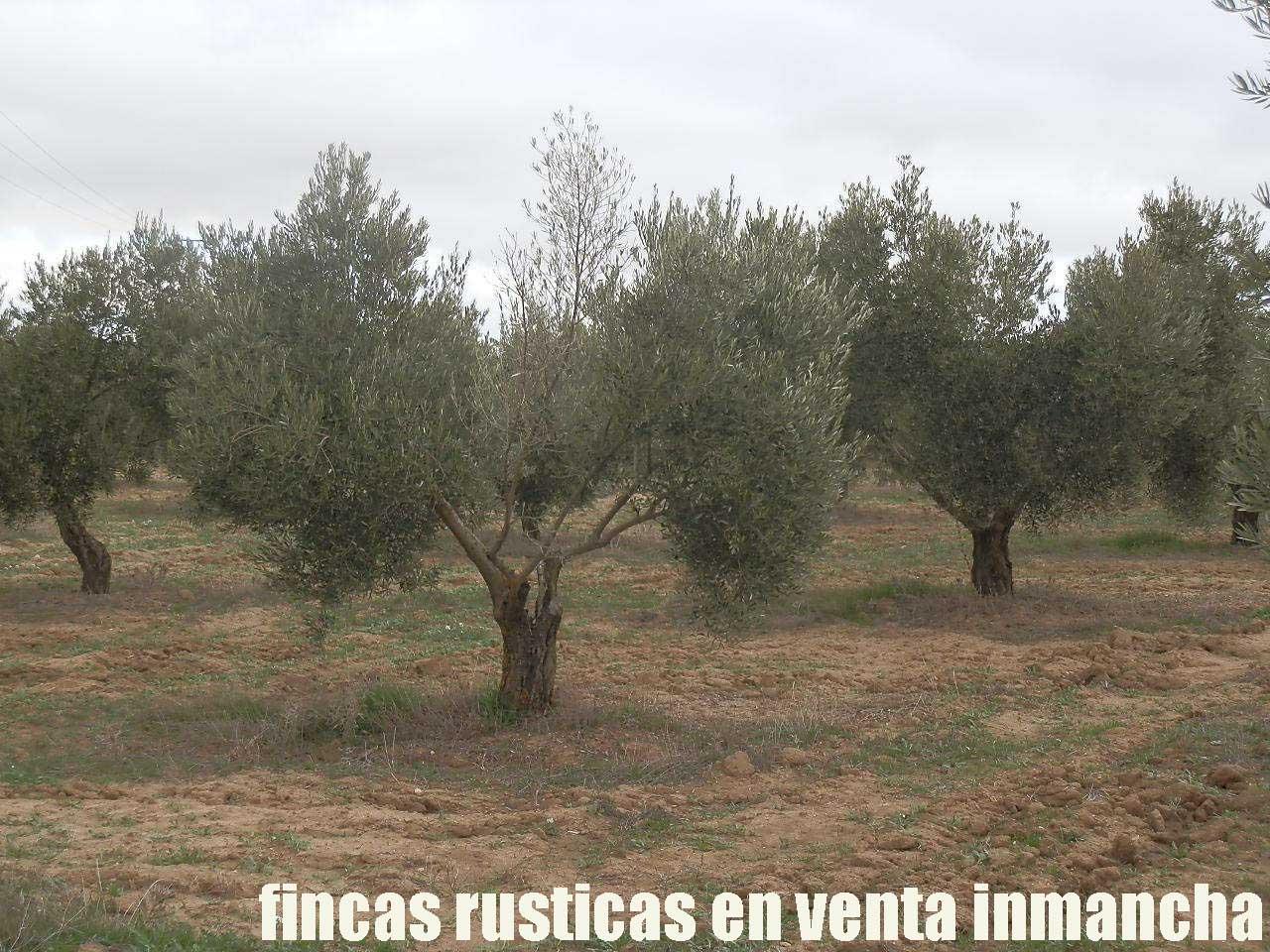 482_fincas-en-venta-77