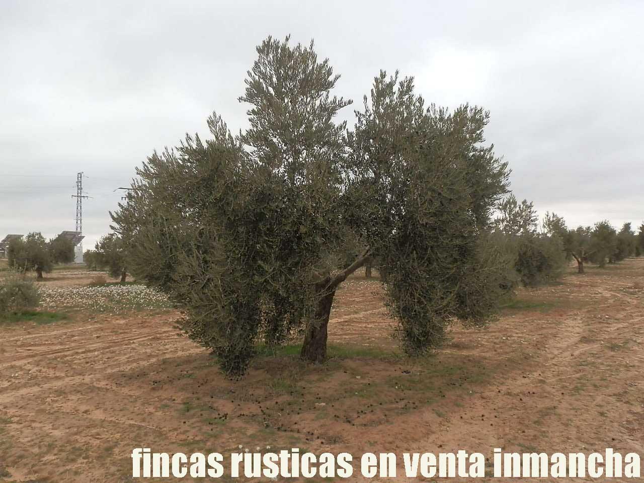 482_fincas-en-venta-79