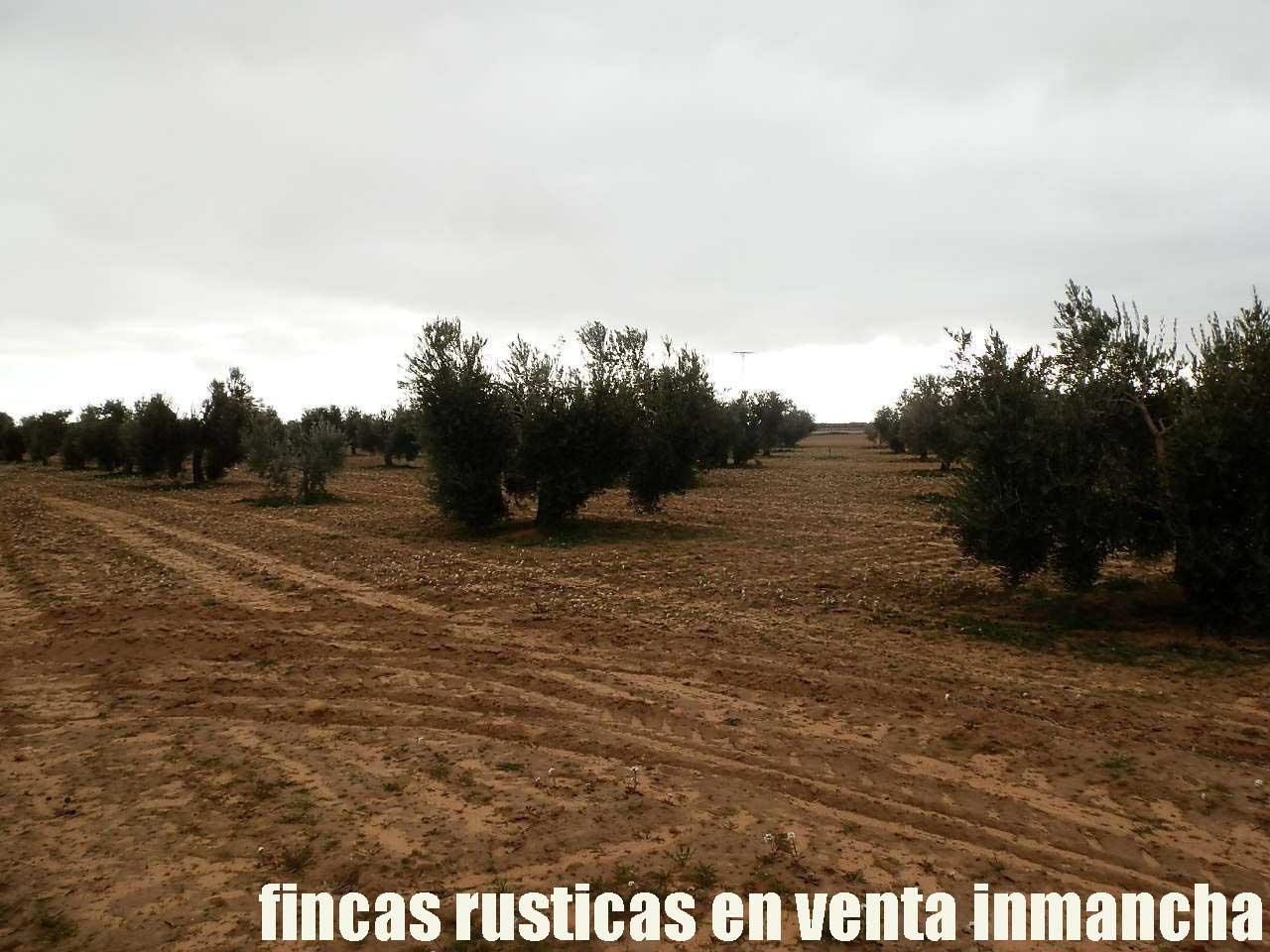 482_fincas-en-venta-84