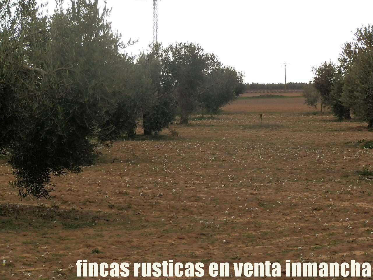 482_fincas-en-venta-85