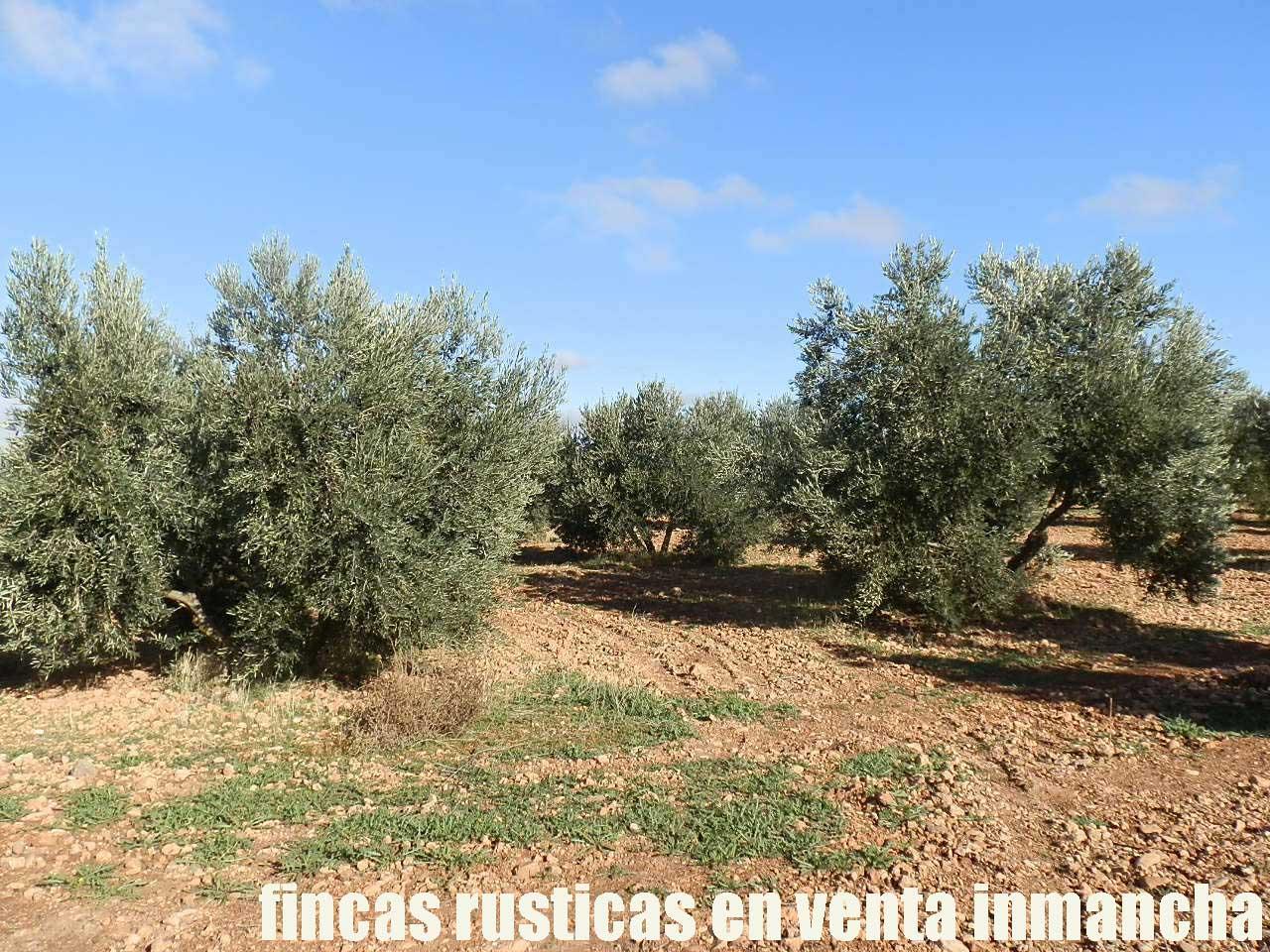 484_fincas-en-venta-01