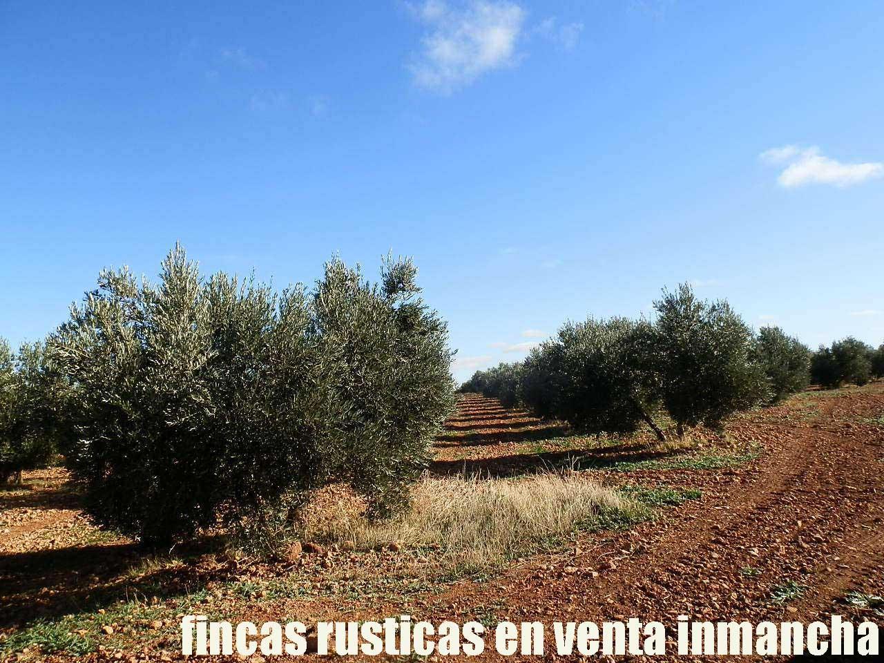 484_fincas-en-venta-03