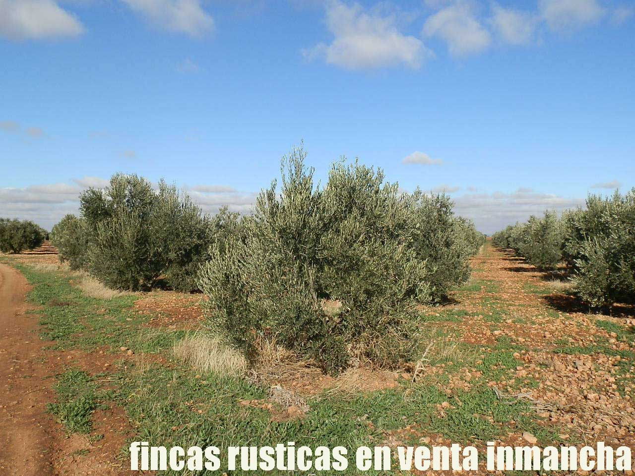 484_fincas-en-venta-04