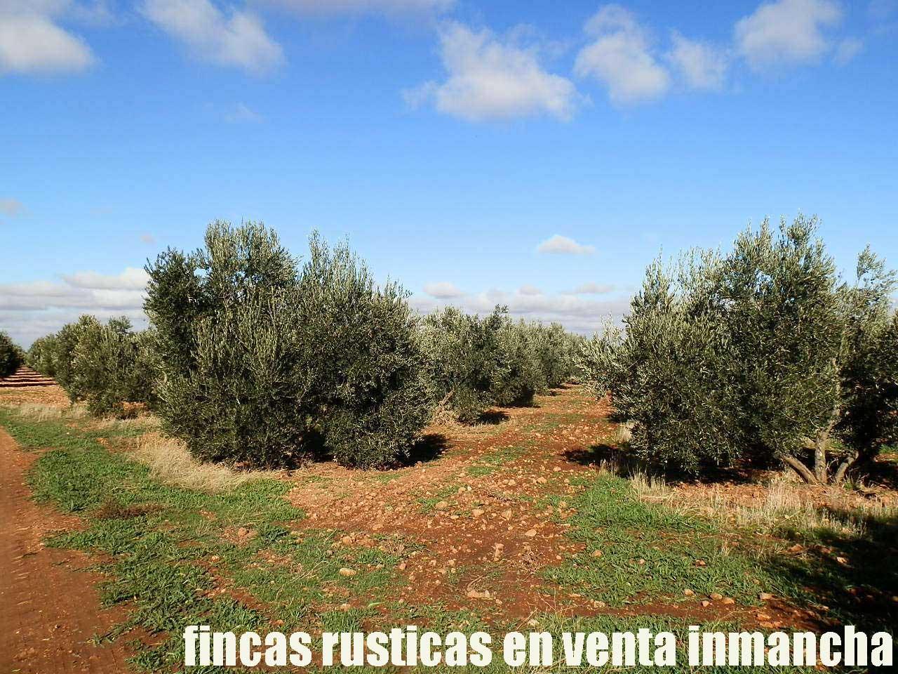 484_fincas-en-venta-05