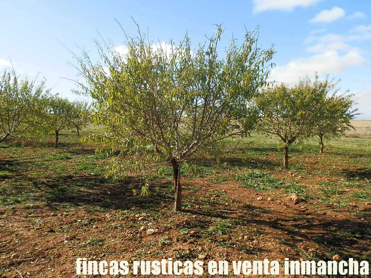 484_fincas-en-venta-07