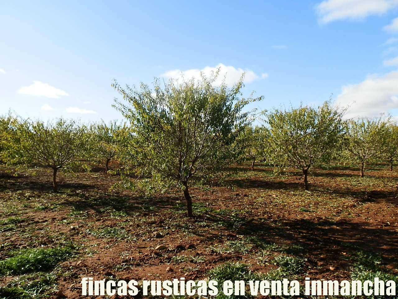 484_fincas-en-venta-08