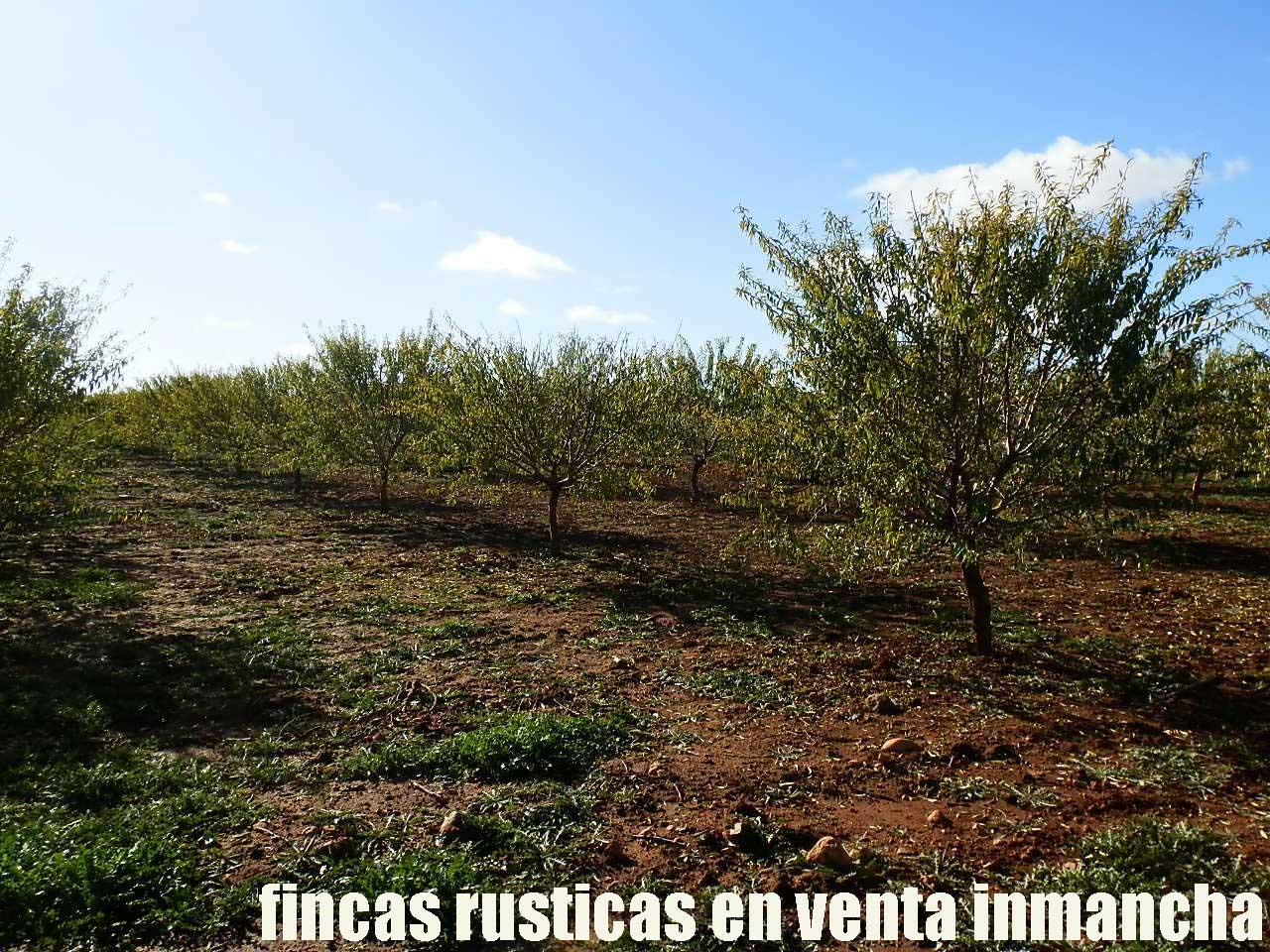 484_fincas-en-venta-09