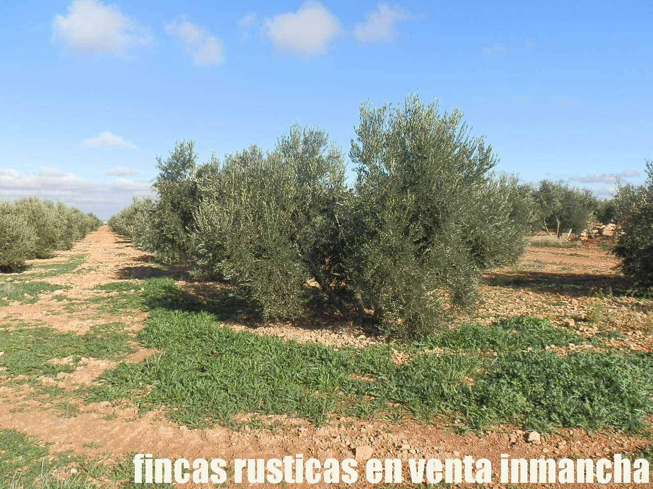 484_fincas-en-venta-10