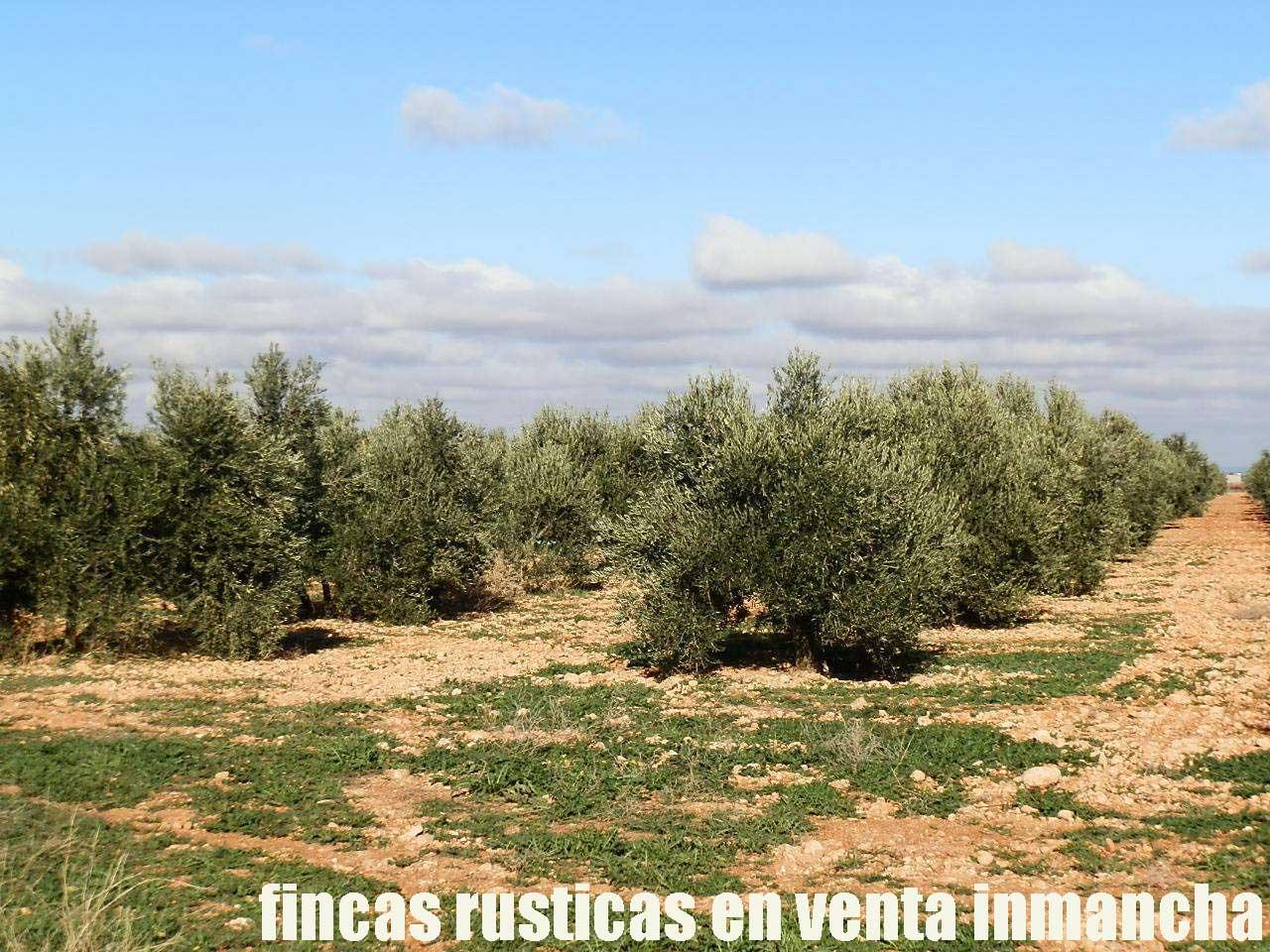 484_fincas-en-venta-11