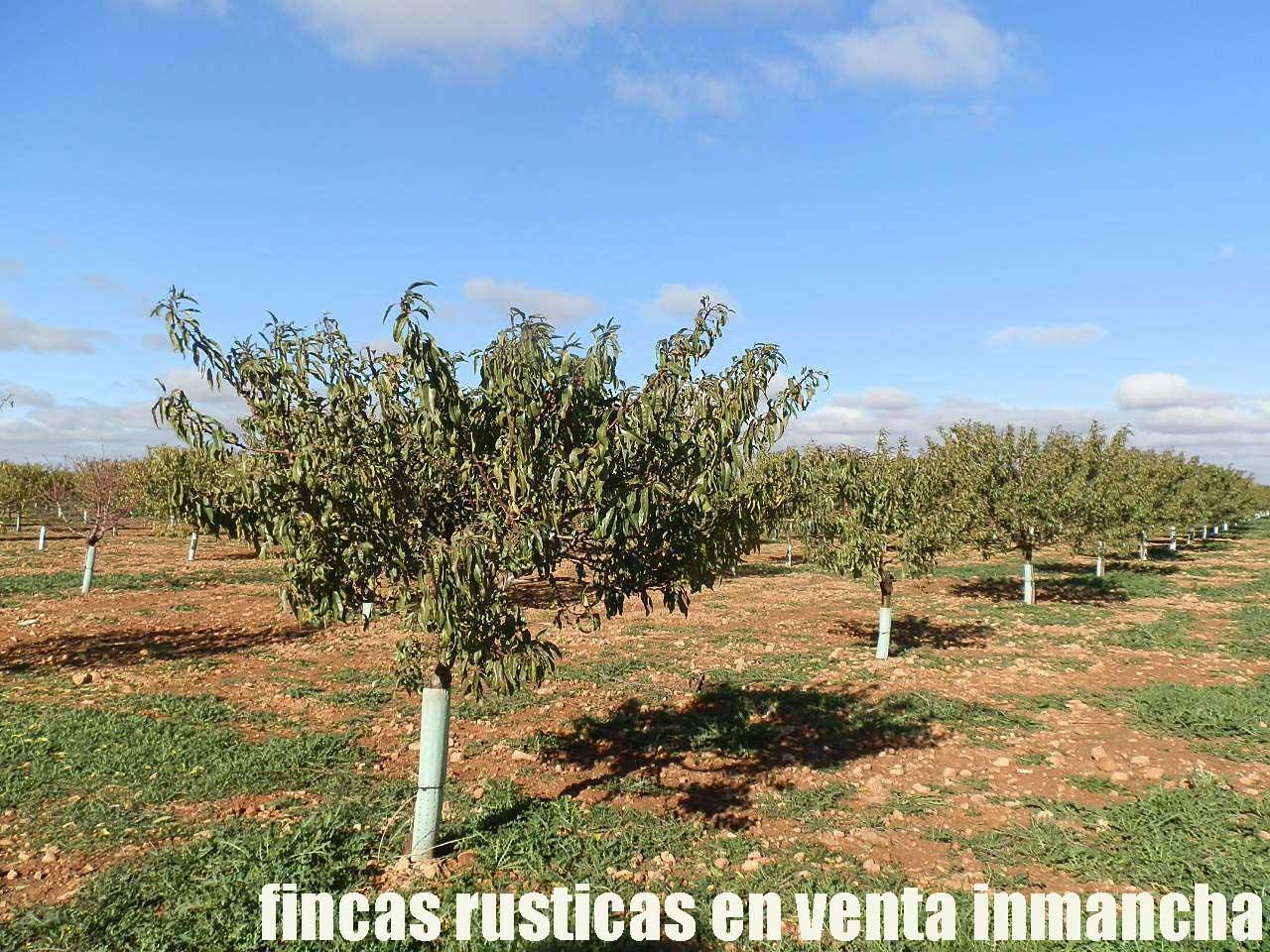 484_fincas-en-venta-18