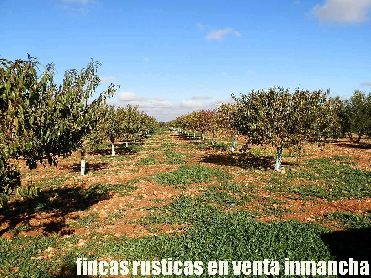 484_fincas-en-venta-20