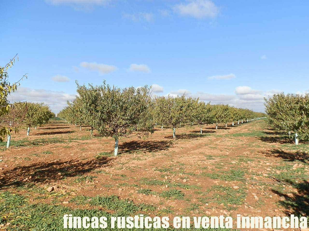 484_fincas-en-venta-21
